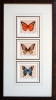 Butterfly Triptych by Mark Thompson